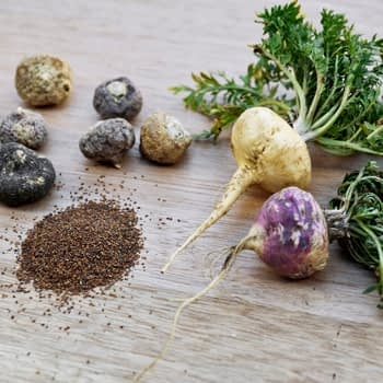 maca roots and seeds
